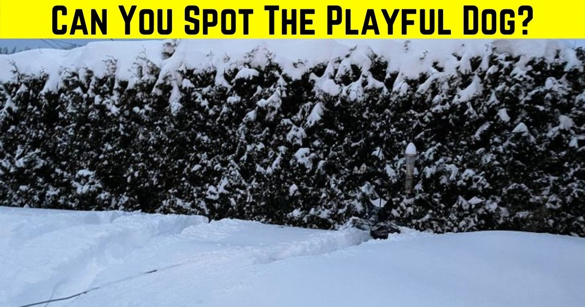 doggo4.jpg - Most People FAIL To Spot The Dog In This Photo! But Can You Figure Out Where It Is?
