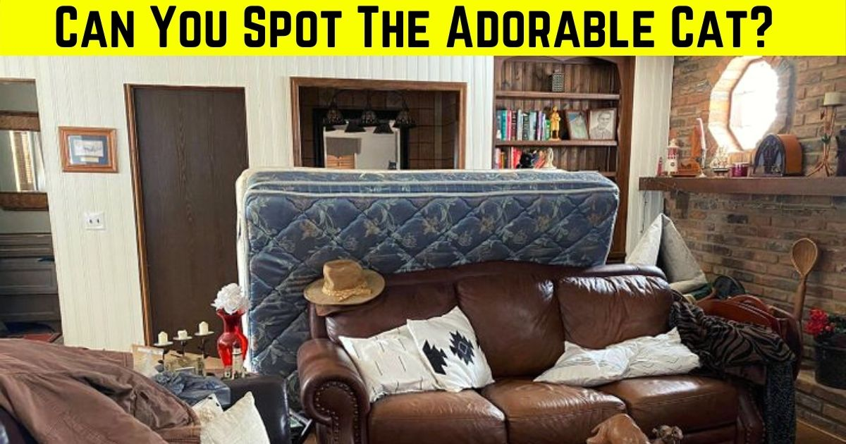 feline4.jpg - 9 Out Of 10 Viewers Fail To Find The CAT Hiding In This Photo Of A Living Room! But Can You Spot It?