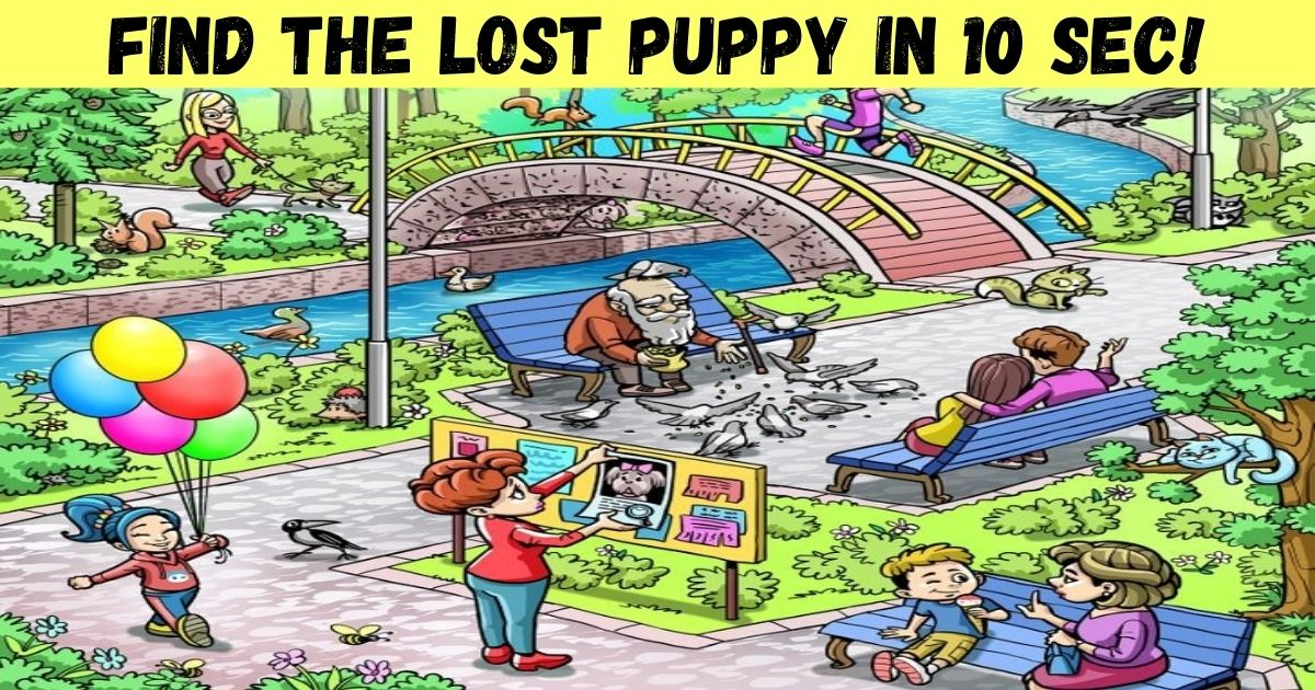 find the lost puppy in 10 sec.jpg - How Fast Can You Spot The Lost Puppy? Help The Woman Find Her Beloved Pooch!
