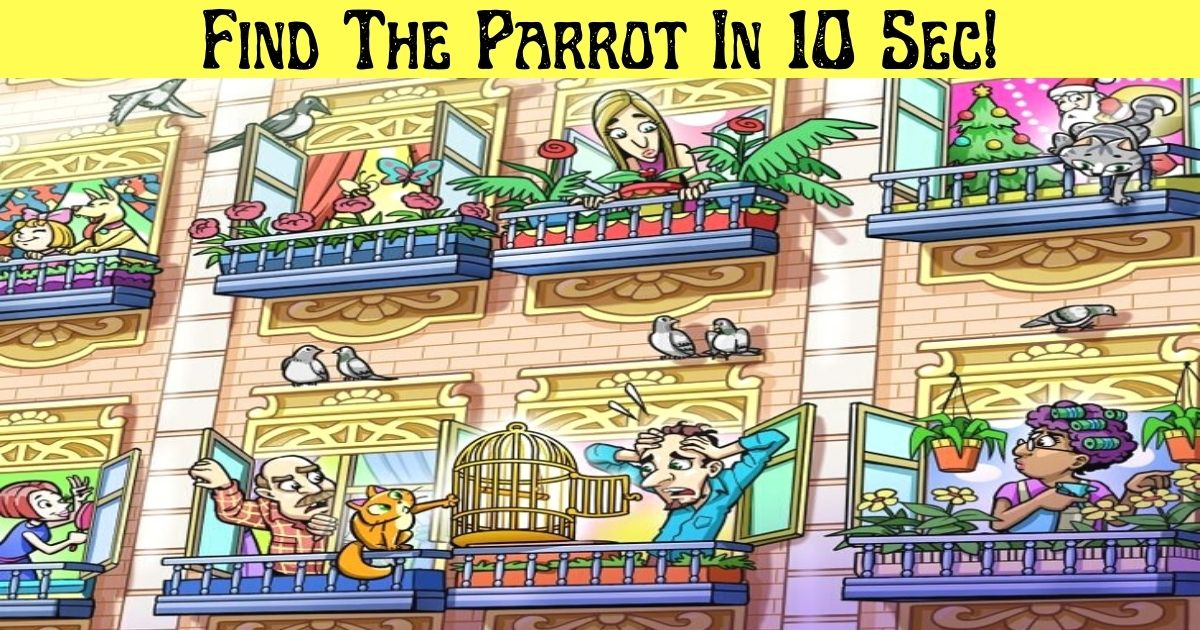 find the parrot in 10 sec.jpg - Find The Missing Parrot In 10 Seconds! 90% Of Viewers Couldn't Spot The Colorful Bird!