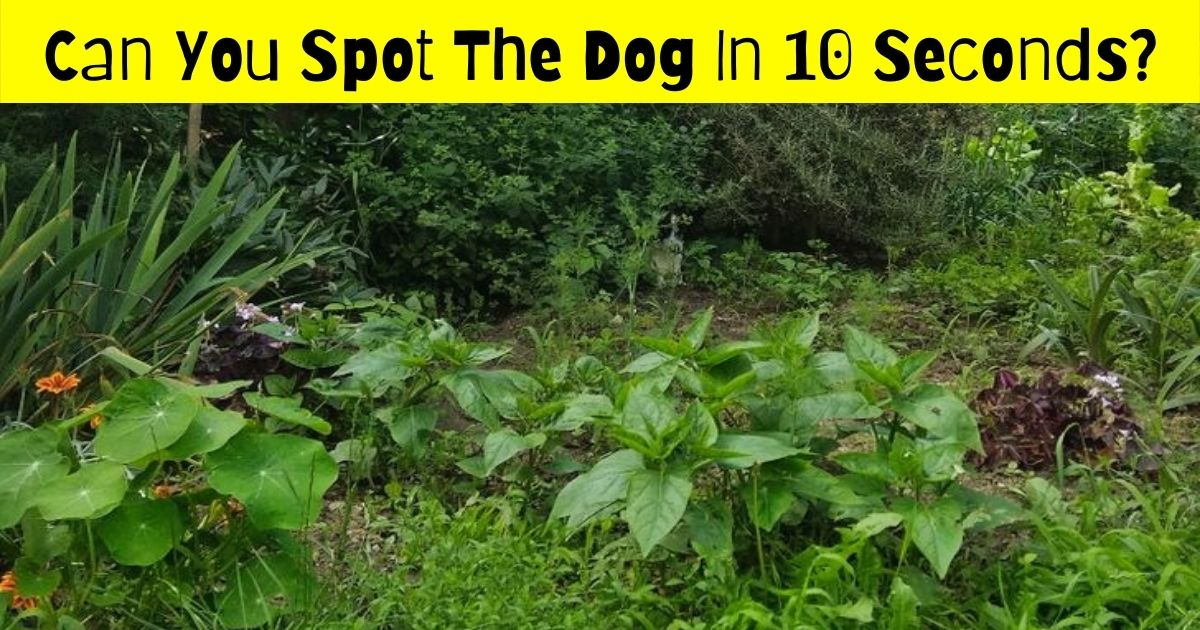 pooch4.jpg - 90% Of Viewers Fail To Spot The Dog In This Photo! But Can You Find It?