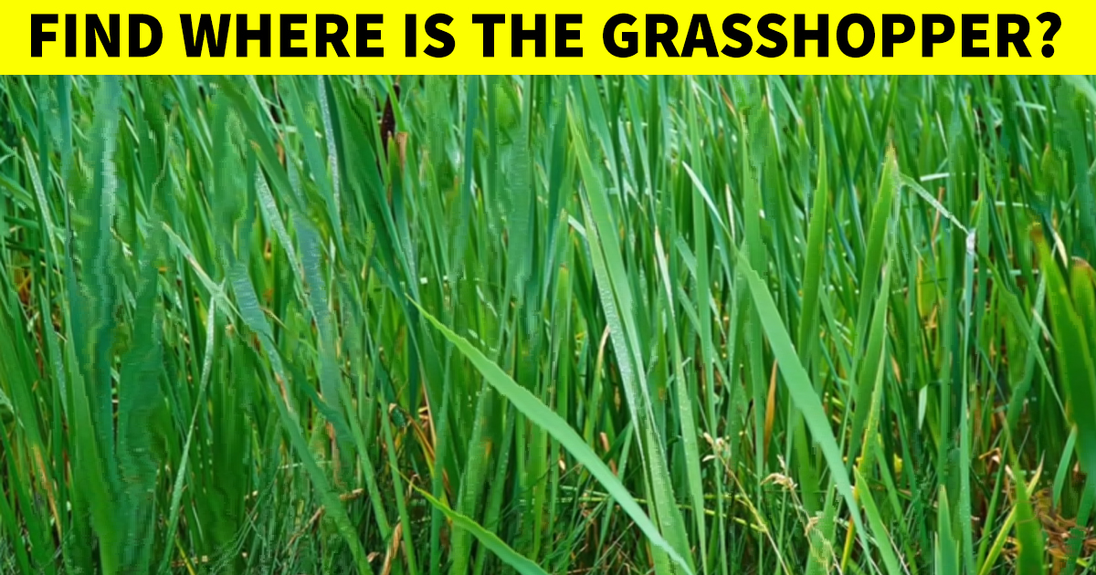 q7 5 1.jpg - Vision Test | Can You Find The Hidden Grasshopper In This Puzzling Picture?